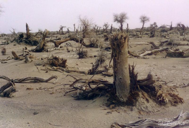 desertification - photo #43